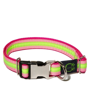 Picture of C. Wonder Neon Bright Stripes Dog Collar